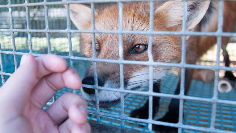 Bidra til nye avsløringer av dyremishandling