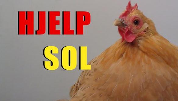 Hjelp høna Sol